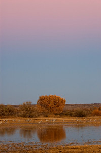 Sunset - Bosque Del Apache NWR - NM