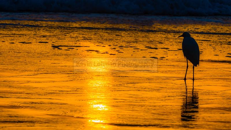 Snowy Egret Sunset