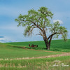 Lone Tree and Tractor