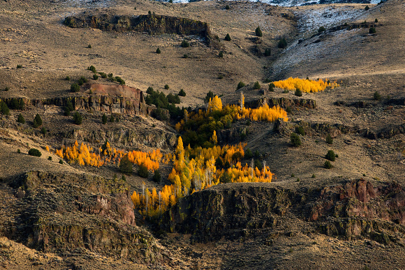 Western facing escarpment of Hart Mountain showcasing the fall color of the aspens in the canyons along the road of the same name in eastern Oregon during the evening of October 10, 2013.
