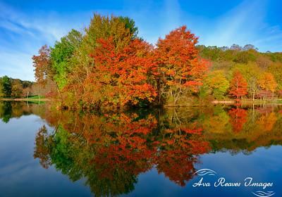 Abbott Lake Reflections