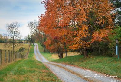 Fall Foliage on The Farm