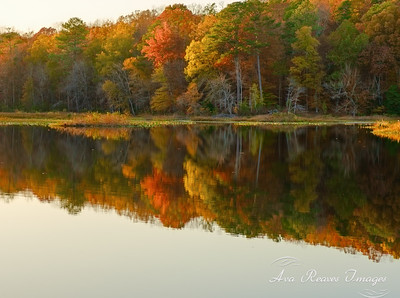 Beaver Lake Reflections