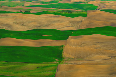 Carpeted Hills of the Palouse