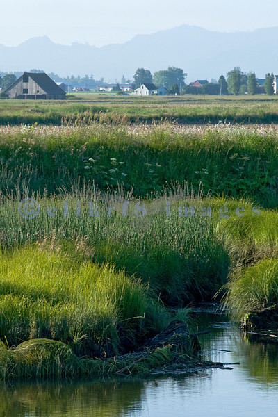 The Skagit Valley has very fertile farmland due to the rivers that overflow their banks in the rainy season. To contain these rivers, farmers have built dikes to prevent flooding.