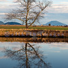 Another shot of the tree that stands alone on a Skagit Valley dike's bank silhouetted during the flood of high tide. The mound to the right is Lummi Island.