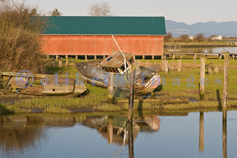 Long abandoned, these fishing boats are at the mercy of the ebb and flow of the tides of Samish Bay.