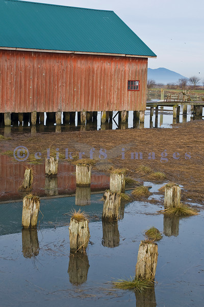 These posts were probably the sight of a pier as they are near the boathouse in the background and are at the mouth of the Samish River.