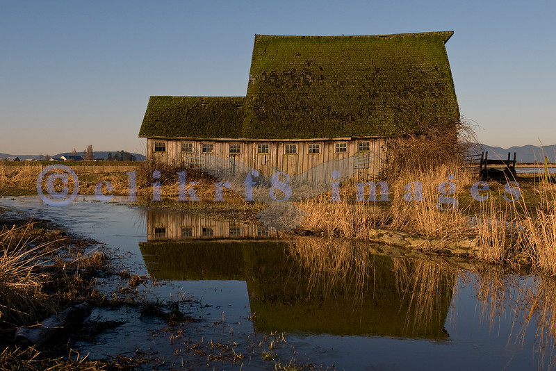 This barn belongs to a descendant of the Galbraith family, early loggers in Whatcom county to the north. This image was taken in mid January 2009 right after major rainfall but until summer, there is usually a big puddle in front.