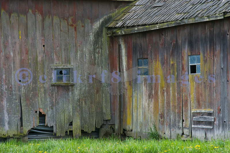 This barn is still serviceable and is used as storage for a tulip farm which I suspect keeps it in disrepair as a backdrop for the crowds who decned upon Skagit County for the annual tulip festival.
