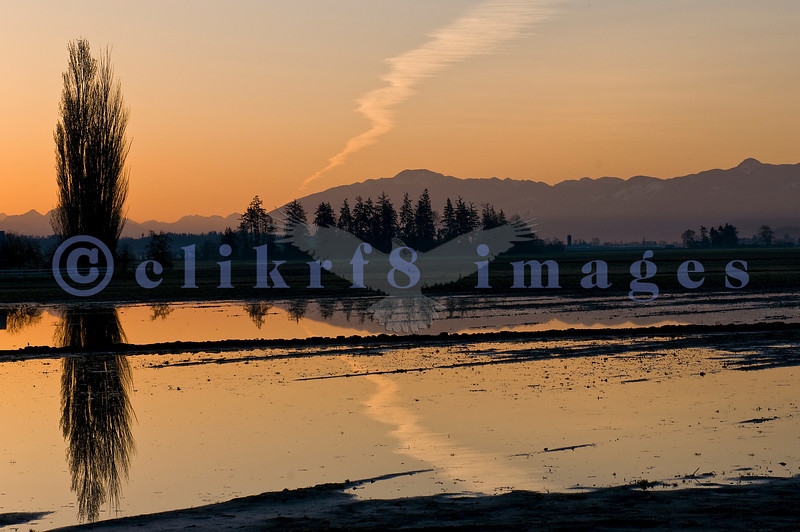 On the way to photograph tulips in the early hours in April, we stopped to shoot the sunrise on Farm to Market Rd in Skagit County.