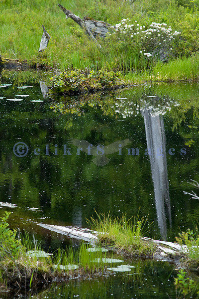 On the way to Baker Lake, there is a small pond along the road. It was a calm, overcast day which was an ideal shooting condition.