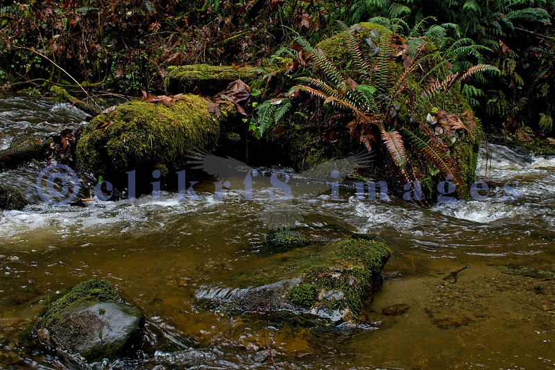 Arroyo Park features Chuckanut Creek as it winds its way to Chuckanut Bay through a wooded gorge. These images were taken in mid-January after flooding caused by snow melt and heavy rains.