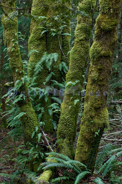 Lake Padden is a Bellingham Park featuring a lake and forests. It is so damp that moss and ferns thickly coat trees.