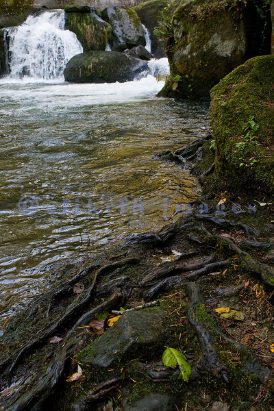 Upstream from the main falls on Whatcom Creek is a smaller falls. Whatcom Creek wanders through a residential park on its way from Lake Whatcom to Bellingham Bay.