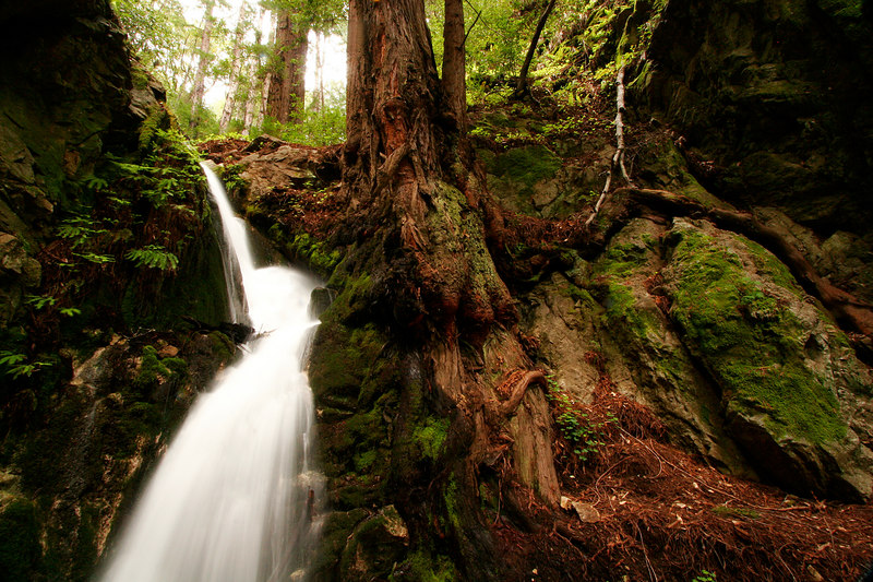Falls and Gnarled Roots, Big Sur<br /> (California, 2006)