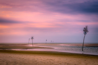 Orleans, MA.  Rock Harbor saplings at low tide with dramatic sunset.