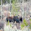 moose cuddle time 24x16