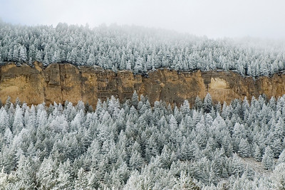Snowy Trees - Big Horn Mountains - WY