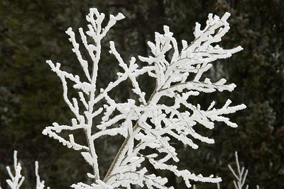 Snowy Branch - Big Horn Mountains - WY