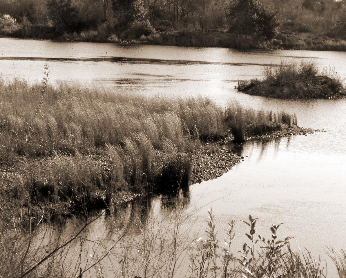 "SBC-122103-10-sepia  ""Grasses on Gravel""  American River Parkway, California.  Sepia-toned image."