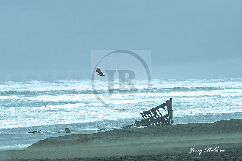 Oregon coast in heavy gale, with bald eagle and ship wreck