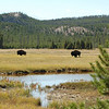 170 - Bison, Yellowstone