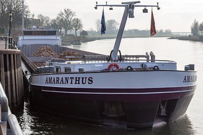 Amarantus, vrachtschip 02331716 info