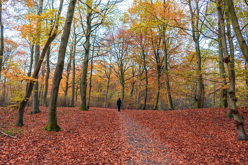 Forest path covered in autumn leaves