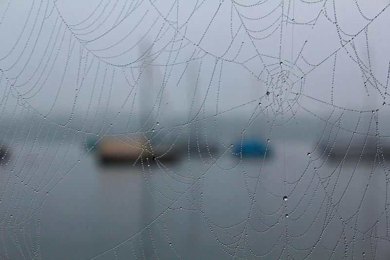 Spinnennetzboote, Spiderwebboat