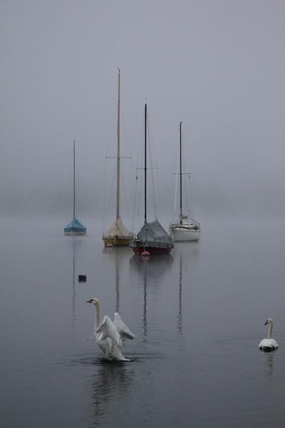 Schwan im Aufbruch, Swan Awakening