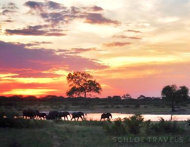 Elephants | Zimbabwe, Africa