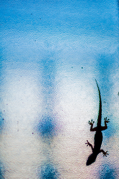Lizard on Window | Haiti