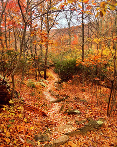 Mountain Fall Trail | Shenandoah Mountains, Virginia