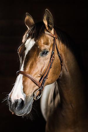 Horse Portrait | Warrenton, Virginia