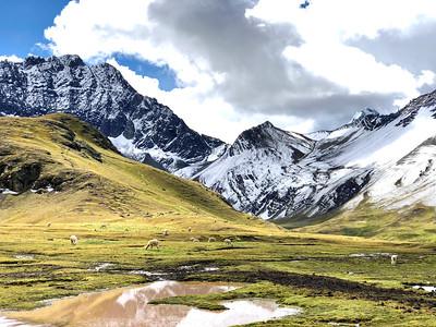 Alpaca in the Valley | Rainbow Mountain, Peru