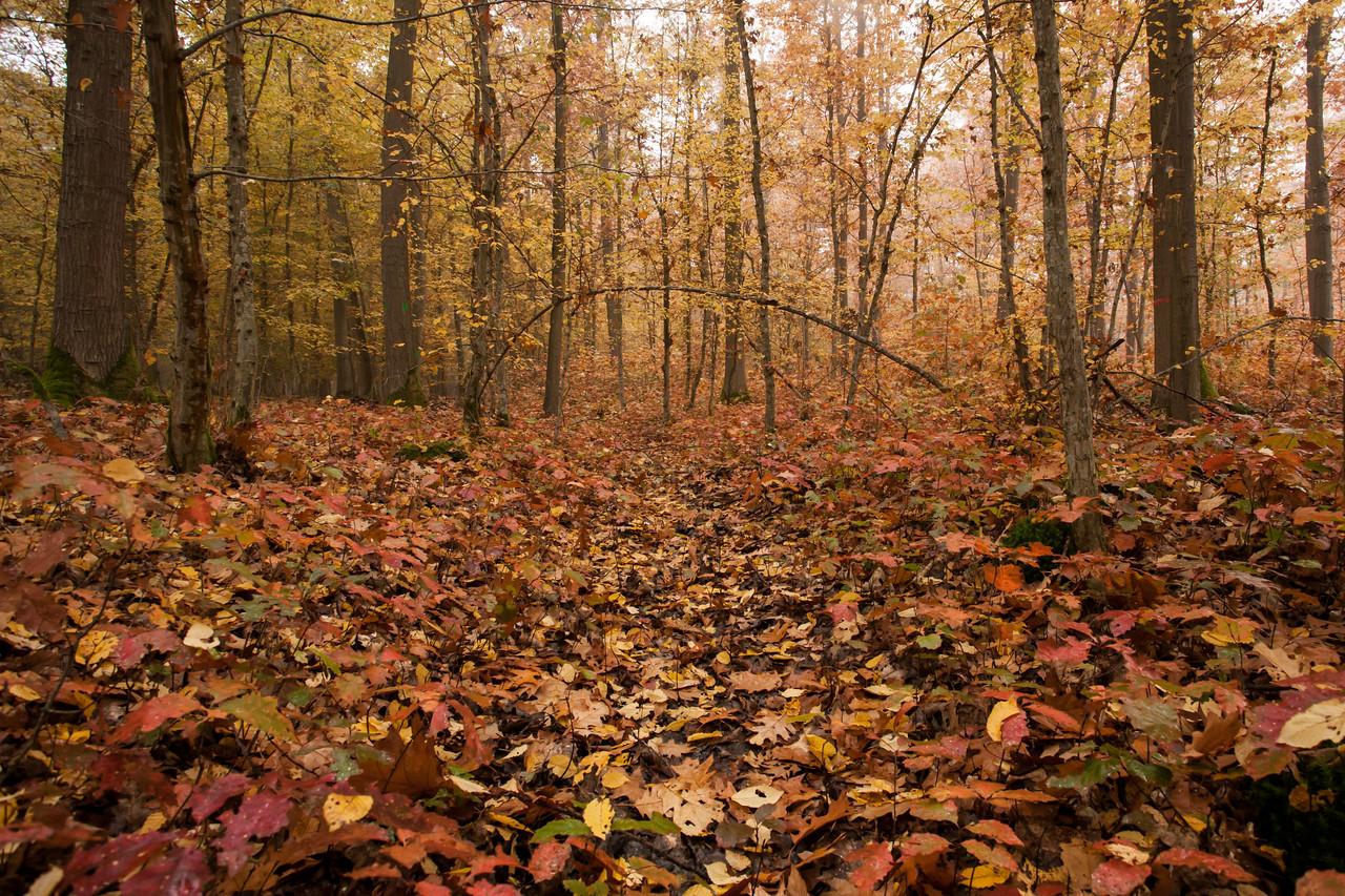 La forêt de feuillus à l'abord de Schutterwald