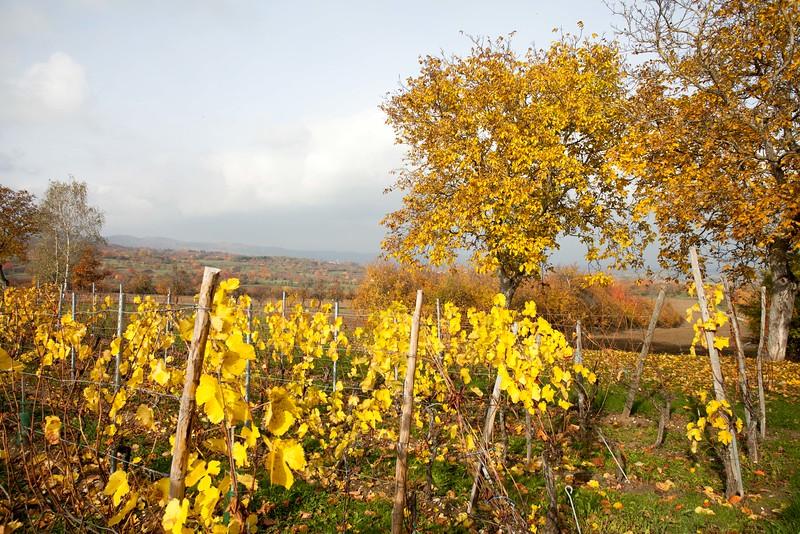 Entre Marmoutier et Salenthal
