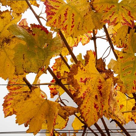 Du 30 octobre  au 1er novembre 2015 : de Marmoutier à Durbach en passant par Ortenberg