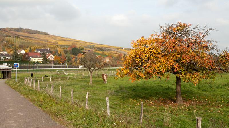 La piste cyclable à l'entrée de Marlenheim
