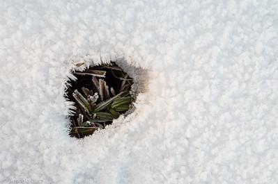 Eiskristalle im Schnee