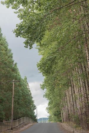 Scholls Trees 9.7.16