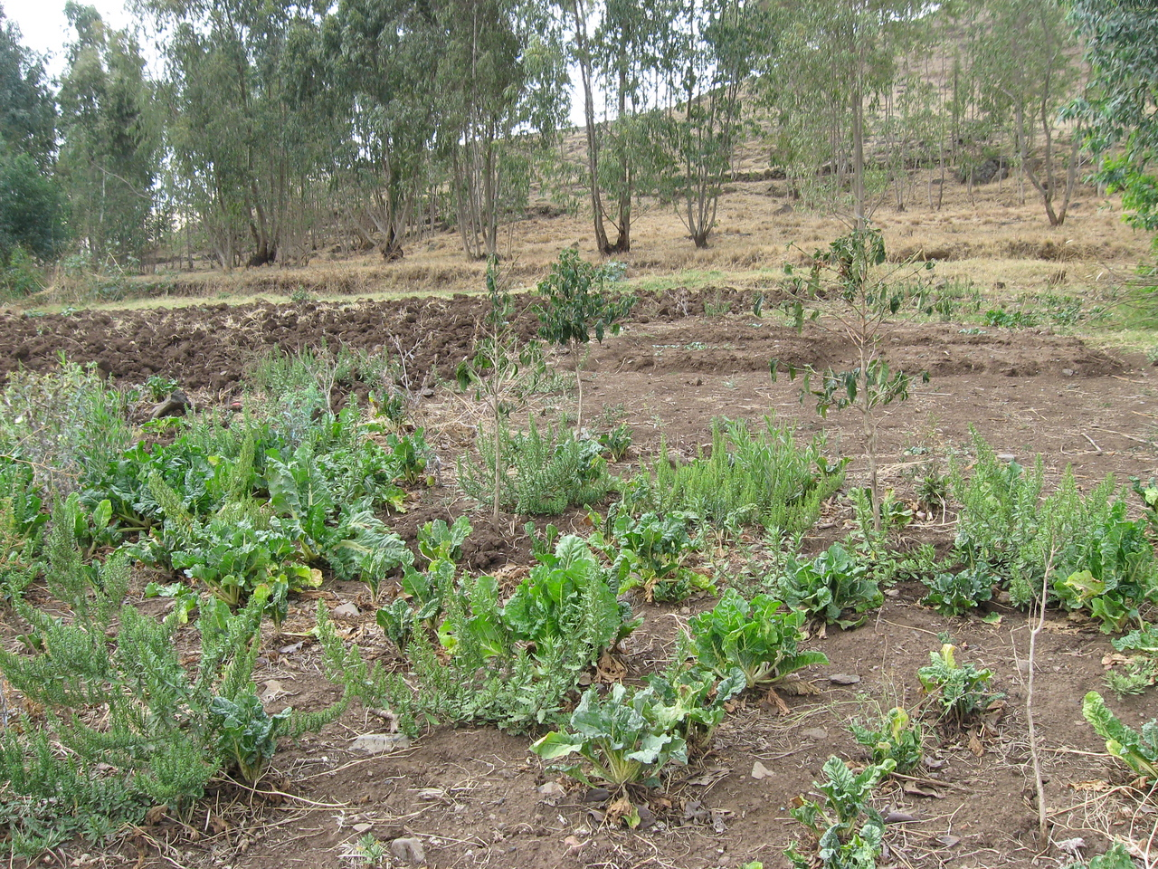 Crops for income generation