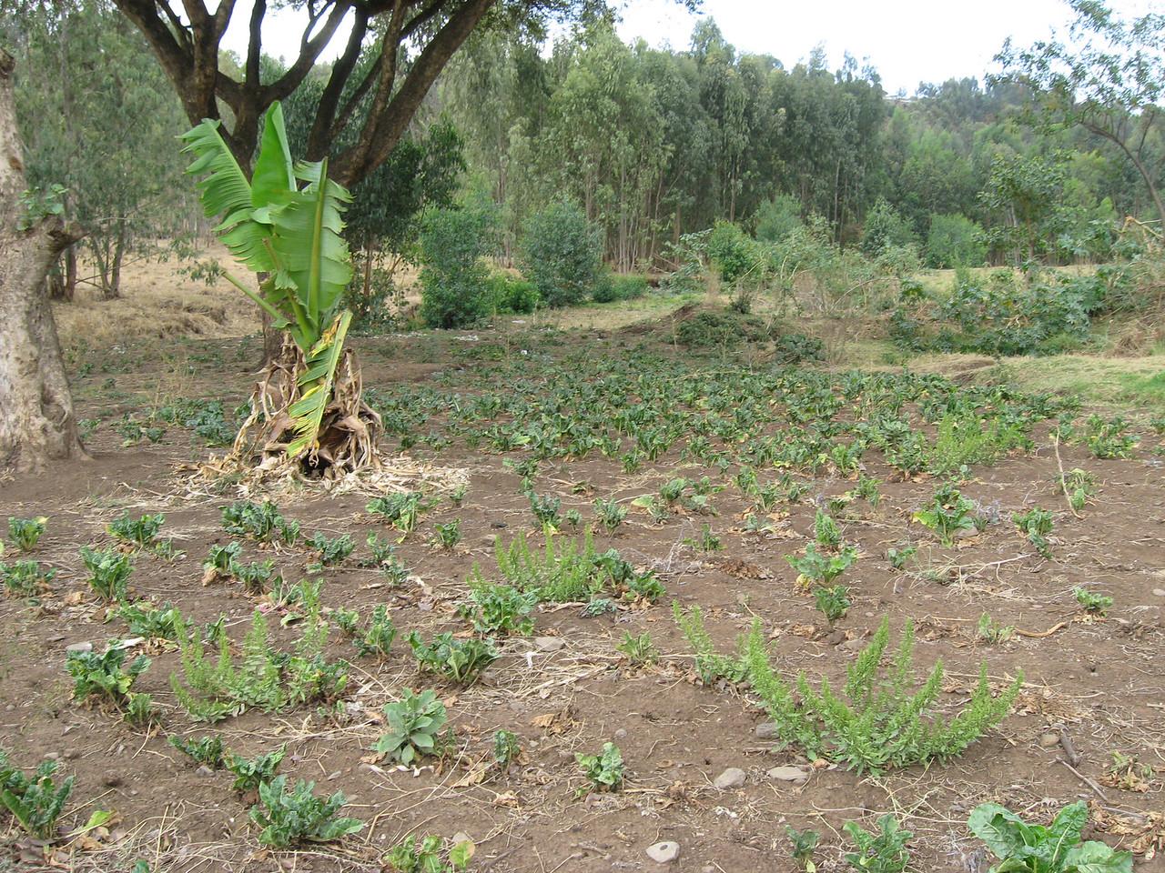 School crop garden