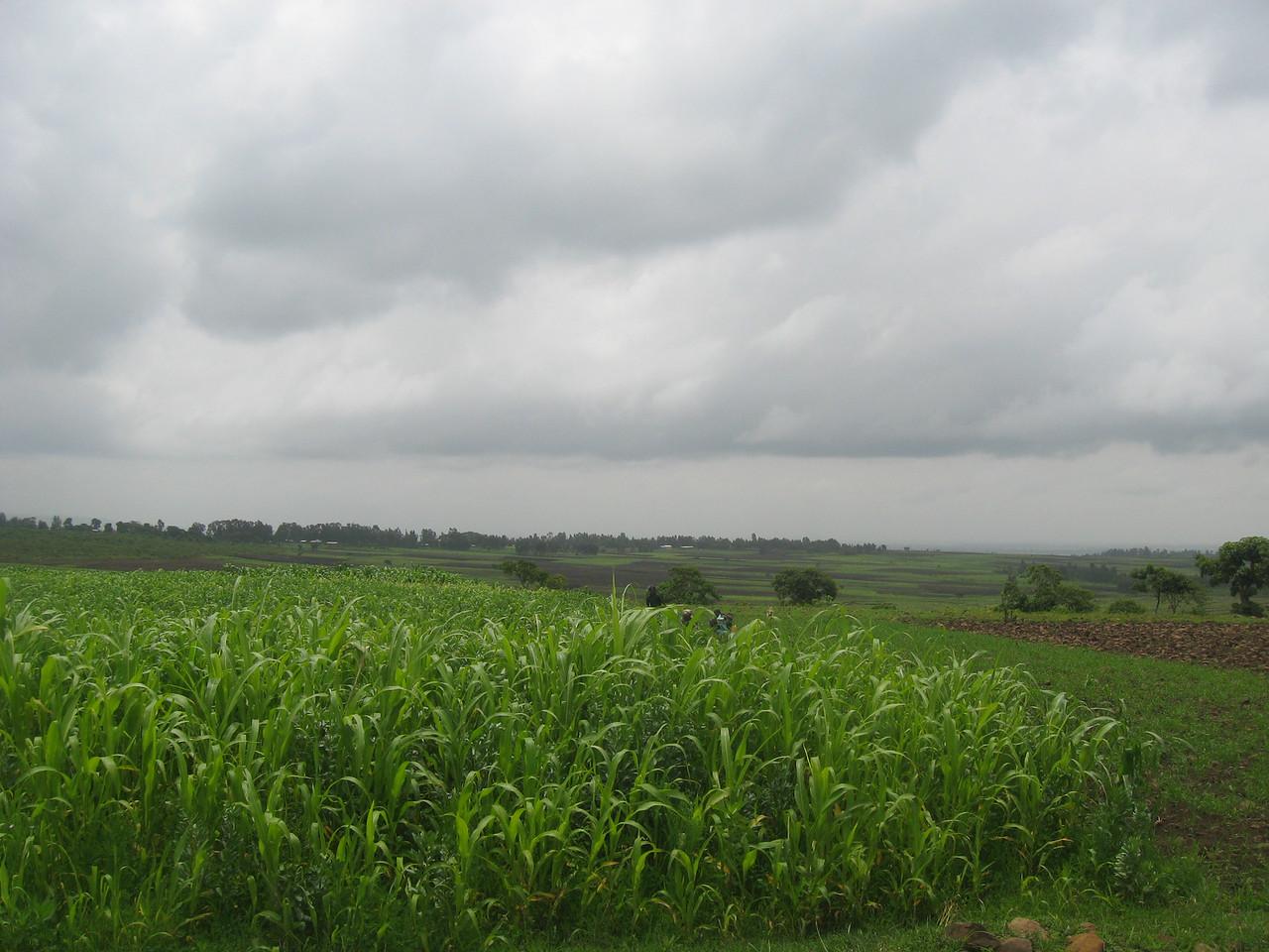 Crops surrounding Jenda School