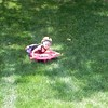 Summer sledding