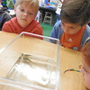 Studying the life of a tadpole.