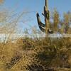 Phoenix_1430