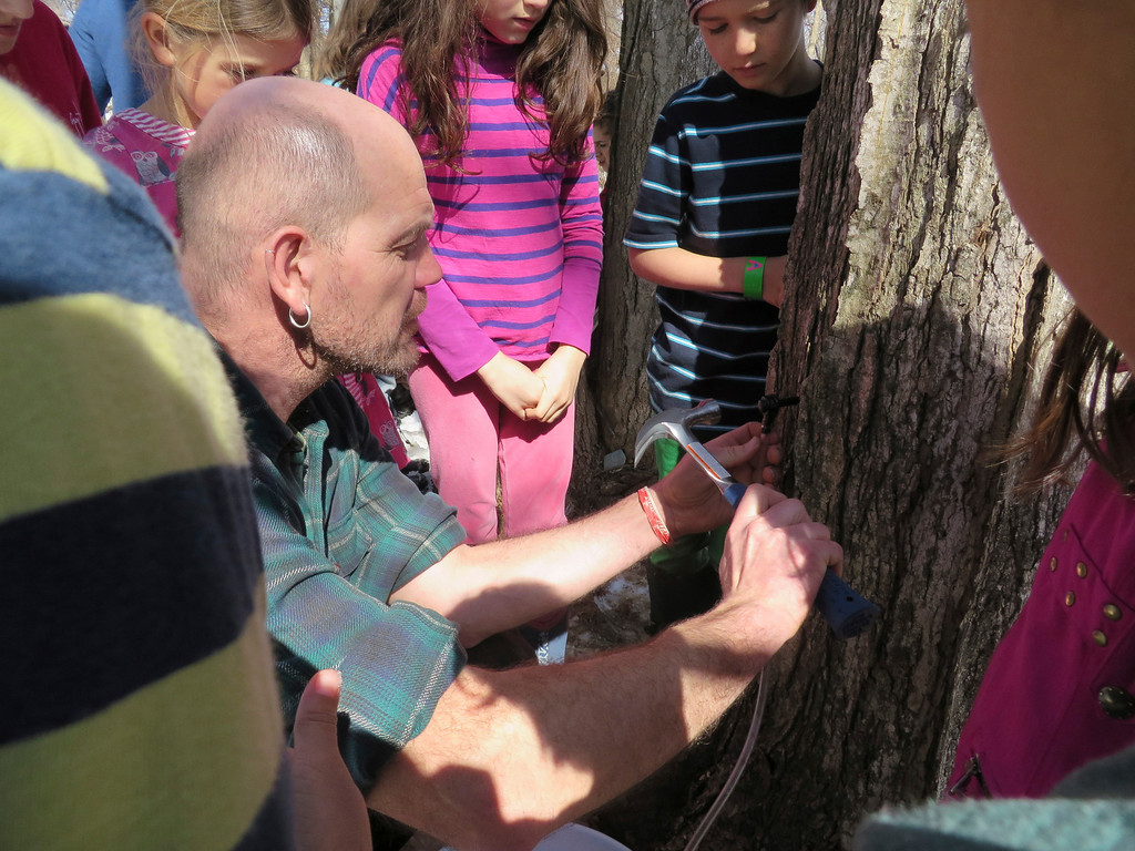 . Third graders watch with fascination as facilities manager Hartmuth Sommer lightly hammers a sap tap into a sugar maple tree Tuesday at the Great Barrington Rudolf Steiner School. Jenn Smith/ Berkshire Eagle Staff/ photos.berkshireeagle.com Tuesday, March 11, 2013