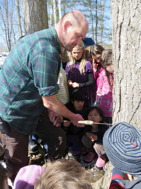 . Third graders watch with fascination as facilities manager Hartmuth Sommer drills by hand into a sugar maple tree to tap sap for sugaring at the Great Barrington Rudolf Steiner School. Jenn Smith/ Berkshire Eagle Staff/ photos.berkshireeagle.com Tuesday, March 11, 2013